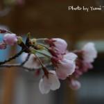 春分も近くなり、切り替え時期ですね。