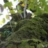 潜在意識の根詰まり、畏怖の念の苗木を育てる