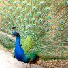 【太陽ハウスナイガしろ説】次のハウスは孔雀の羽である説。