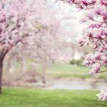 春の訪れと前世