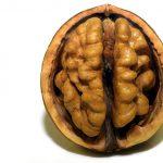 脳をだませ!!!
